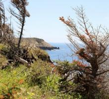 Coastangs Trail